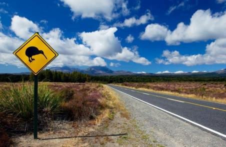 kiwi-crossing